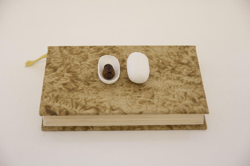 Andrea Guerzoni, Complemento oggetto interno 03, 2017, crisalidi bachi da seta con bozzolo, cm 10x15