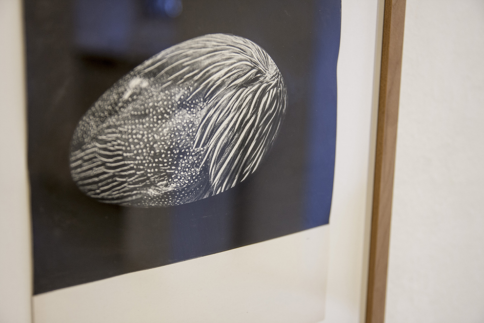 Andrea Guerzoni, Memoria di forma (Gallina faraona) dettaglio, inchiostro di china
