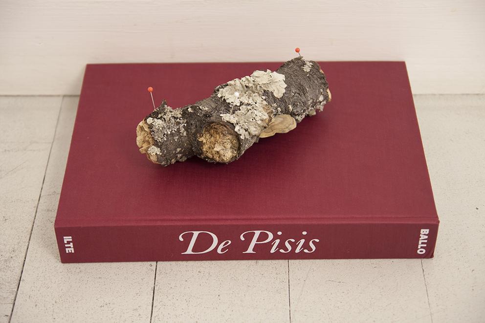 Andrea Guerzoni, Complemento oggetto interno 01, 2017, ramo con licheni, De Pisis