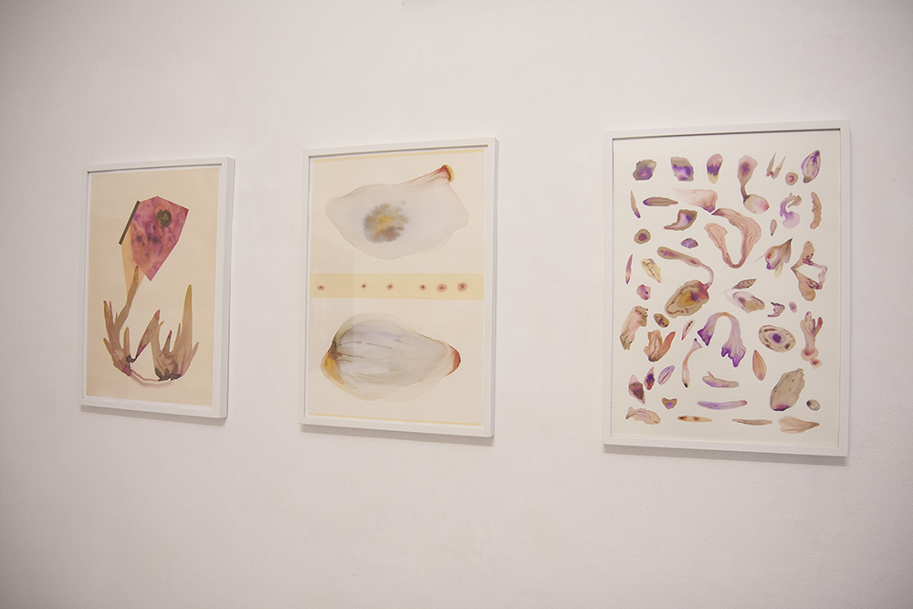 Evolutionary patterns, exhibition view, Isabella Nazzarri
